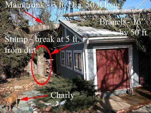 The Chrismas Tree 12/23/2004