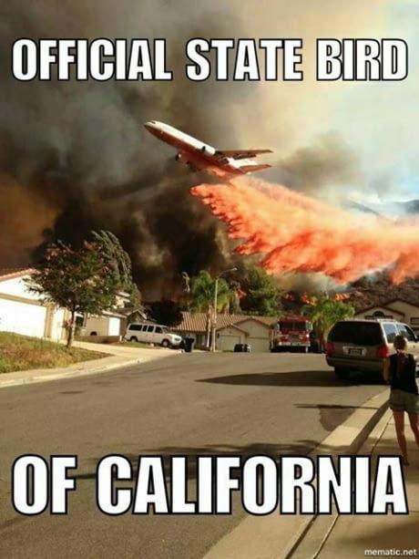 CalStateBird