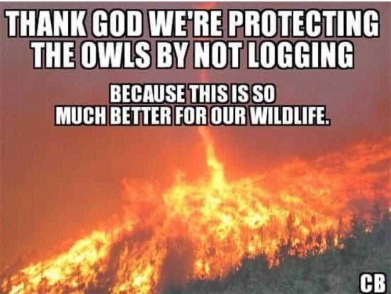 loggingfire