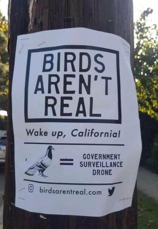 birds real
