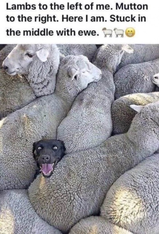 admit feel sheepish