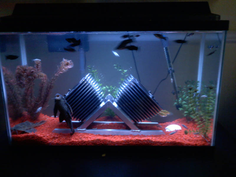 I had a few hours to kill.  What do you think?  The fish love it.